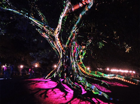 Synthesis Royal Botanic Garden Vivid 2016 960x601